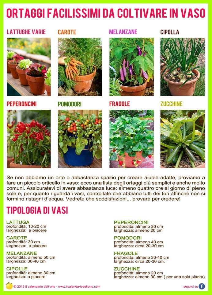 1000 images about giardinaggio on pinterest for Ortaggi in vaso