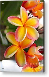 Plumeria Smoothie Acrylic Print by Brian Governale