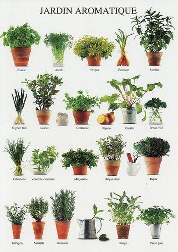 Tipos de plantas para un jardín aromático y de cocina