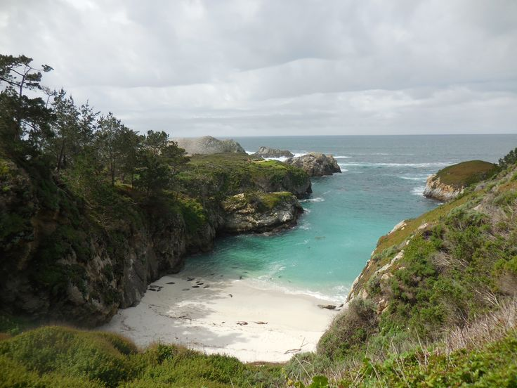 Sea lion hideaway Point Lobos State Natural Reserve Carmel CA [OC] [46083456] #reddit