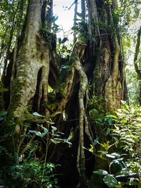 Cool tree at Kinabalu National Park  http://www.inspirawtion.com/kinabalu-national-park.html