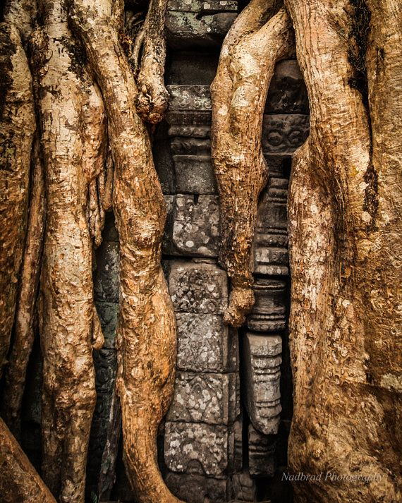 Nature vs Man Roots in Angkor Cambodia Temple by NadbradDesigns