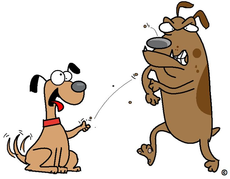 Are you sometimes too dog tired to act responsible ? Read more.