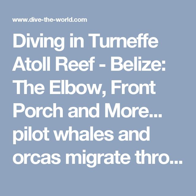 Diving in Turneffe Atoll Reef - Belize: The Elbow, Front Porch and More... pilot whales and orcas migrate through the area march-june !!