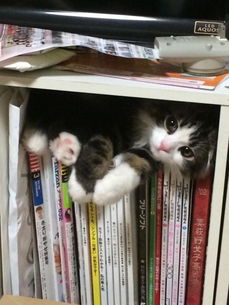He always finds a cozy little spot not far away...