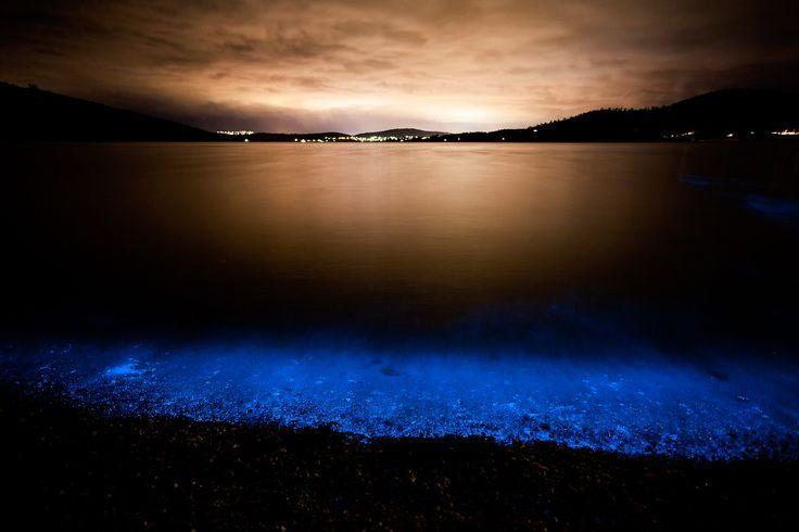 Bioluminessence in Hobart