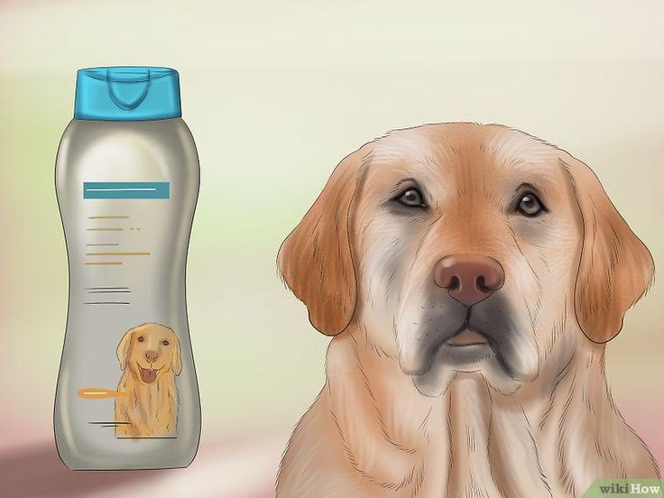 Make Your Dog Smell Better  Dog Smells, Smelly Dog, Your Dog-8769