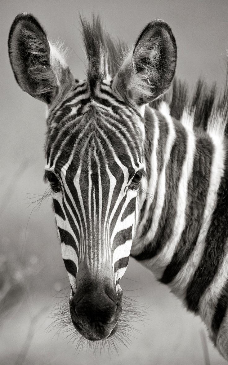 """Portrait of Africa"" | ©Anton Lyalin"