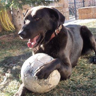 My ball!♥♥♥♥♥ #ilovemydog #instapuppy #instagramdogs #dogs #petlovers #like4like #followme