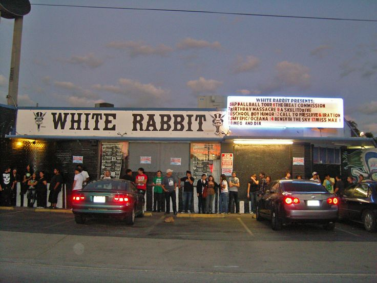 white rabbit san antonio - Music Search Engine at Search.com