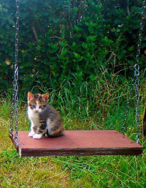 """Will somebody give me a push?"" Sorry little kitty, I think you might fall off!"
