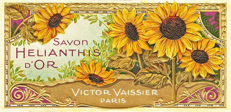images of vintage sunflowers | ... Free Vintage Clip Art ...