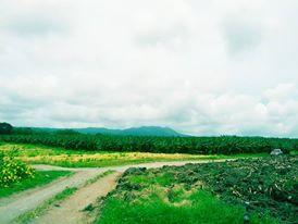 Banana Plantation www.kadalys.com