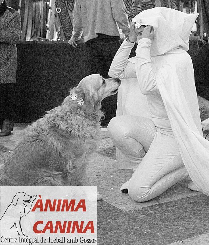 #mercatdereis @Ontinyent 2015 #dogdancing