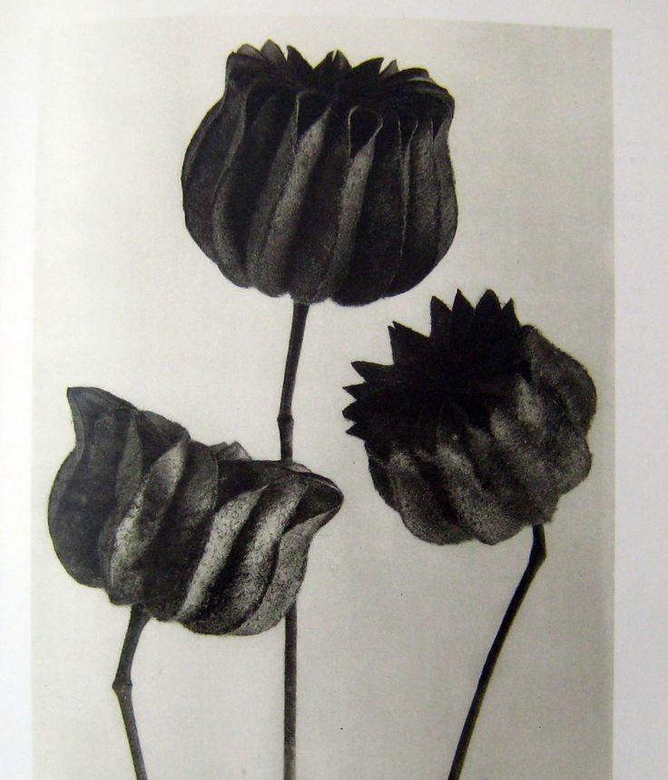 flower.jpg (927×1082)