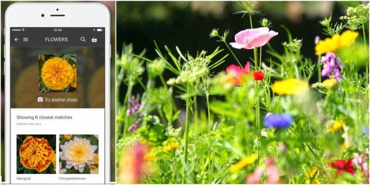 This app will be a gardener's new best friend