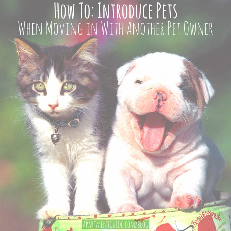 How To Introduce Roommate Cat With Your Dog
