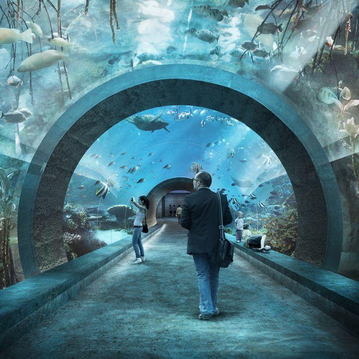 Oceanium Basel, Boltshauser Architekten. *1st Prize* Visualization nightnurse images.