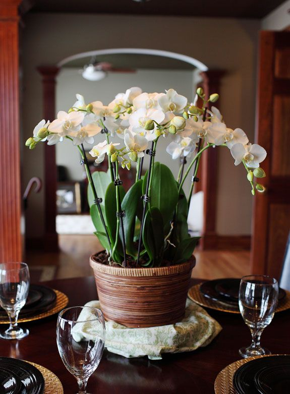 32 Best Orchid Centerpieces Images On Pinterest