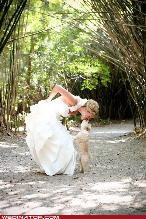 awwww..Ideas, Best Friends, Wedding Pics, Dogs Photos, Wedding Photos, Dogs Lovers, Wedding Dogs, Wedding Pictures, The Brides