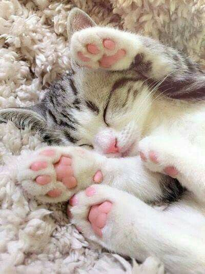 What is sweeter than a sleeping kitten?