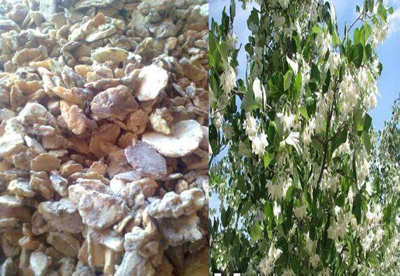 Pure Sumatra Tapanuli Benzoin Styrax Frankincense by barustore