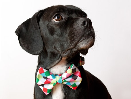 Beautiful Puppies Bow Adorable Dog - 8e21a0aa7541b19d44996da20c05e56b--dog-bowtie-bowties  Picture_551695  .jpg