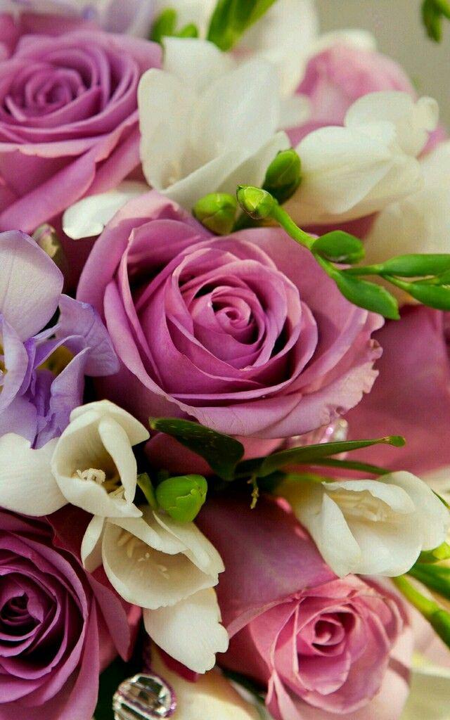 Картинки розы на телефон вертикальные