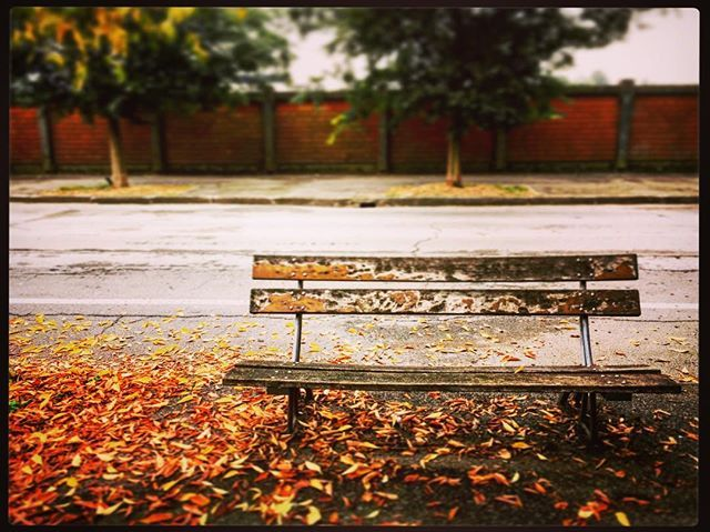 #awaiting to #recover from my #convalescence // the poetry of autumn leaves 🍃 it's a balm for my heart🏮🎈🎐// #endure #nevergiveup #bestrong #womanofhonor #hope #feelings #passion #instagood #ignation #igers #instamood #instacool #instapic #picoftheday #pictureoftheday #shotoftheday #nature #iphone