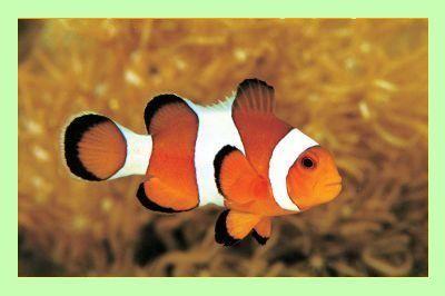 Clownfish for Skype: Tradutor gratuito de linguagem em tempo real - download