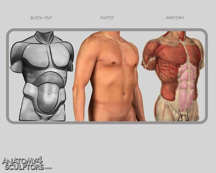 41 best Anatomy_Torso images on Pinterest | Anatomy reference, Human ...