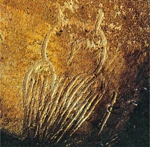From the Paleolithic era, the earliest record of snowy owl appears in France, inside a cave.