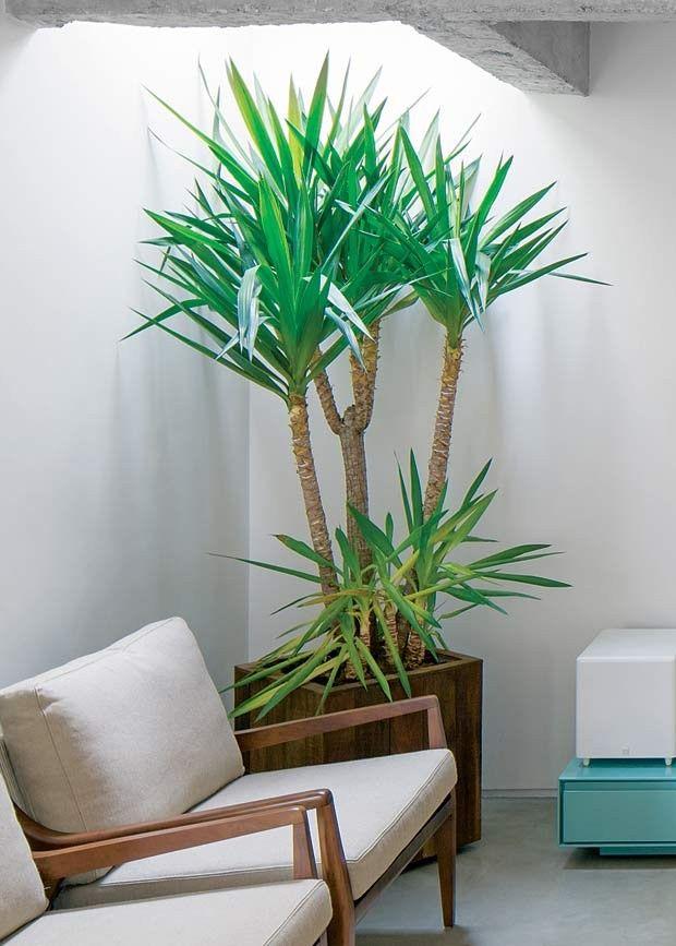 Projeto do arquiteto André Becker plantas-iuca-vaso-poltrona (Foto: Leonardo Finotti/Editora Globo)