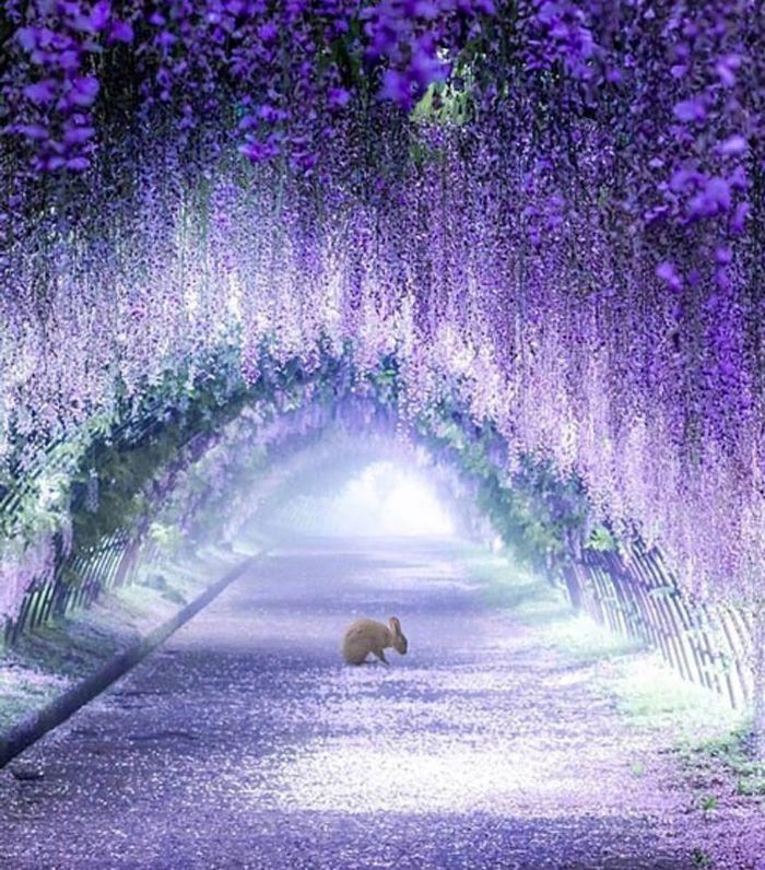 Wisteria Tree Tunnels In Japan Look Like Something From A Fairy Tale Wisteria Tree Wisteria Garden Wisteria