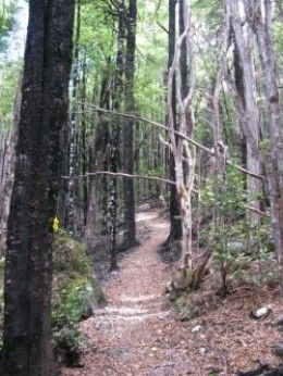 Black Hill Walk at Lake Rotoiti