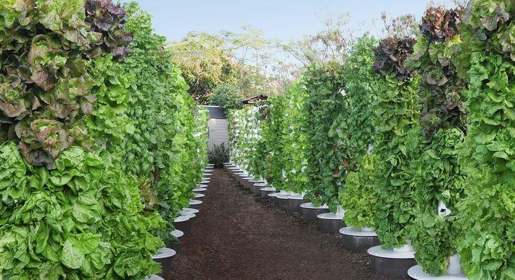 33 Varieties That Grow Well In a Vertical Tower Garden | SeedsNow.com