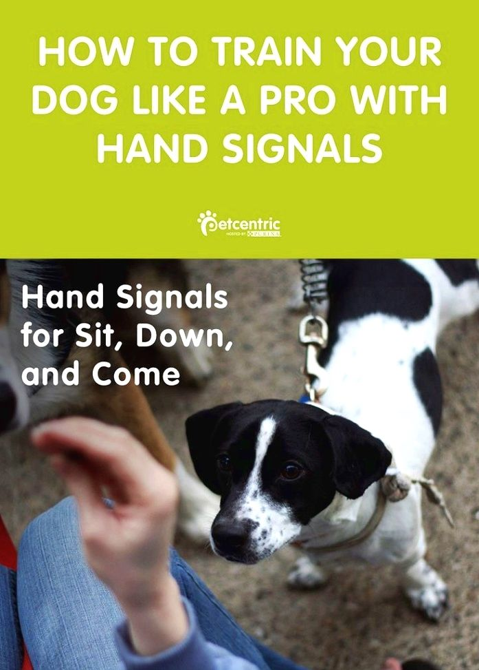 Dog Training Info Learn How To Provide The Dog Positive
