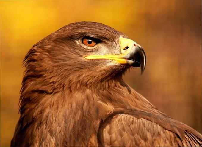 6724917-md.jpg (679×496): Nature Animals, Eagles, Birds