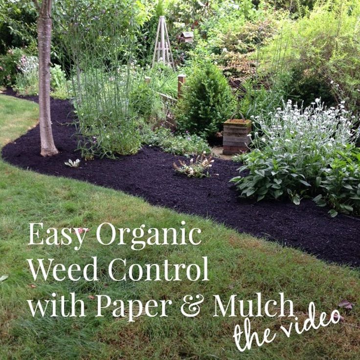 Easy Organic Weed Control With Paper & Mulch