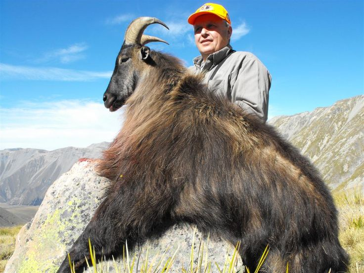 Tahr hunting in New Zealand.