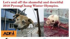 Petition · Korea Government and The PyeongChang Organizing Committee for the 2018 Olympic: Stop Dogs Slaughtering Right Now if You Want PyeongChang Olympics! · Change.org