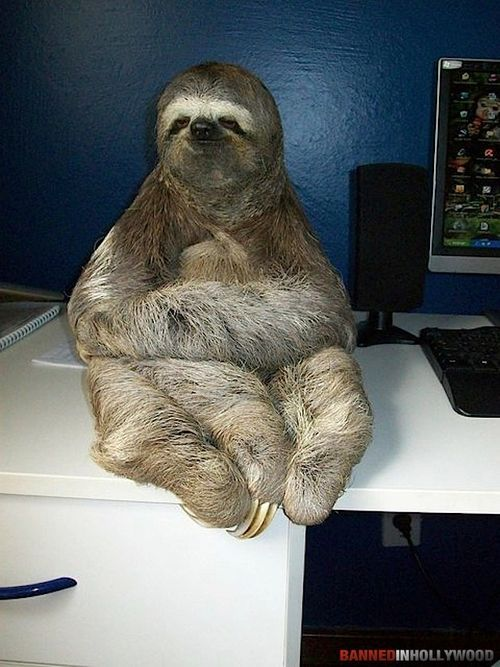 605 best Sloths images on Pinterest | Sloths, Sloth and ...