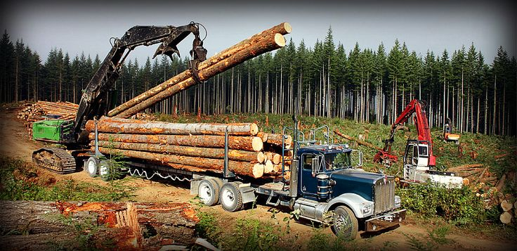 logging industry - Google Search