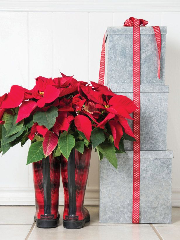 Cute poinsettia displayed in boots.