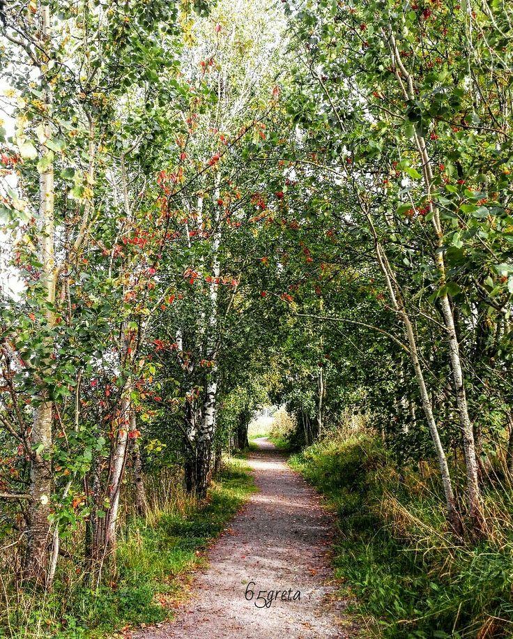 ~Forest hike~ Barkåker, Norway  🌳🌳🌳🌳🌳🌳🌳