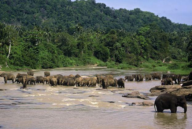 Elephant habits http://www.elephant-world.com/elephant-habitat/