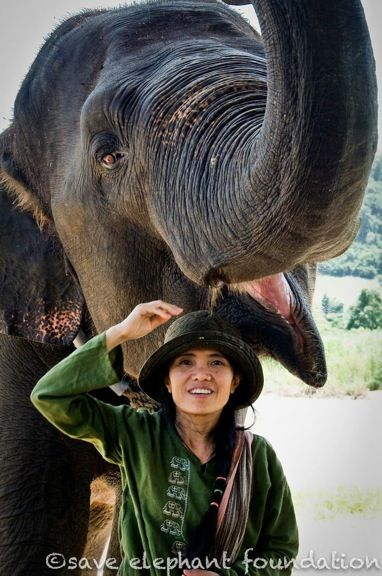 Interview With Lek Chailert -   The Elephant Whisperer of Elephant Nature Park