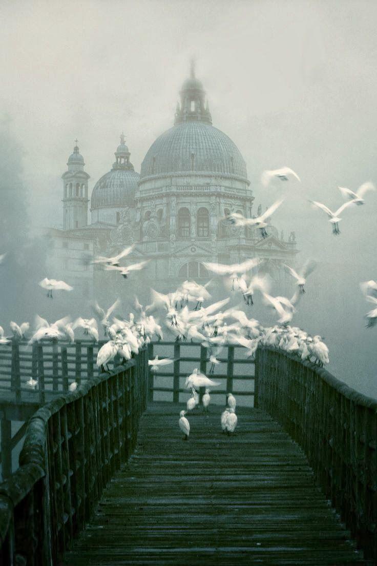 Venice in the fog, Italy: Ears Mornings, Beautiful, Venice Italy, Places, Santa Maria, Catholic Church, Photography, Mornings Lights, Wild Birds