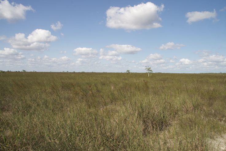 Everglades Anhinga Trail