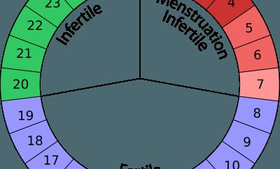 Ovulation Calendar - Most Fertile Window to do Baby Making Sex